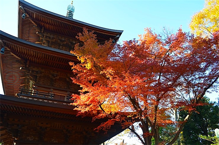 Autumn leaves at the shrine