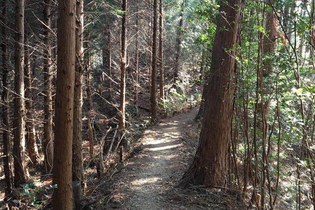 japan-wakayama-kumanokodo-pilgrimage-trail-walk-nakahechi-day2-takahara-tsugizakura