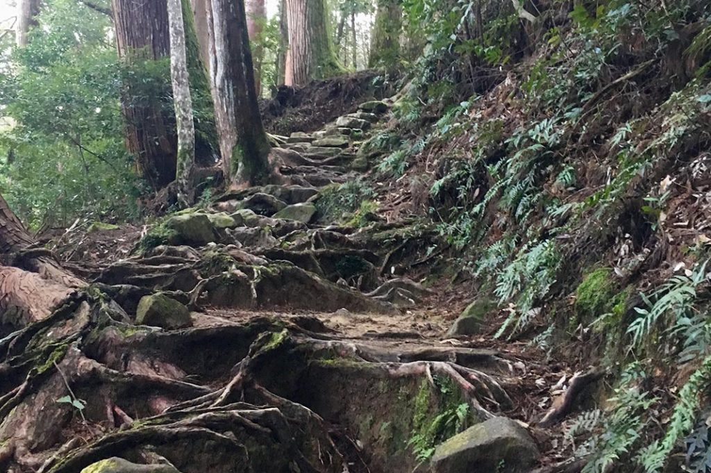 This stretch of the trek is perhaps the most beautiful. Towering cedars and trickling streams. Pine strewn paths and makeshift tree-root staircases give way to shoulder-height ferns.