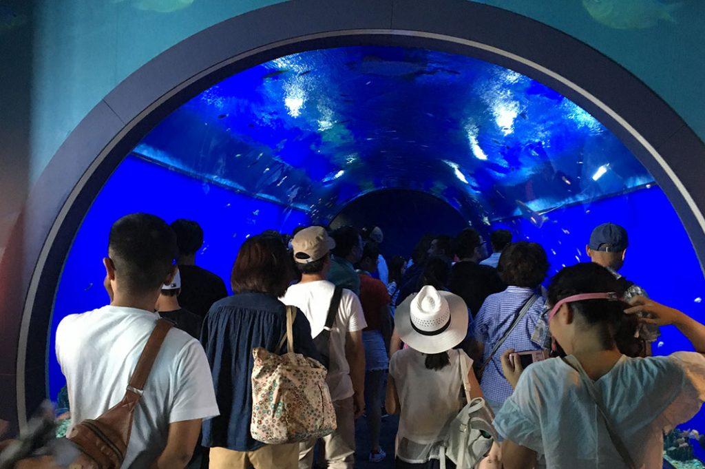 Things to do in Osaka: Osaka Aquarium Kaiyukan. A great indoor activity Osaka.