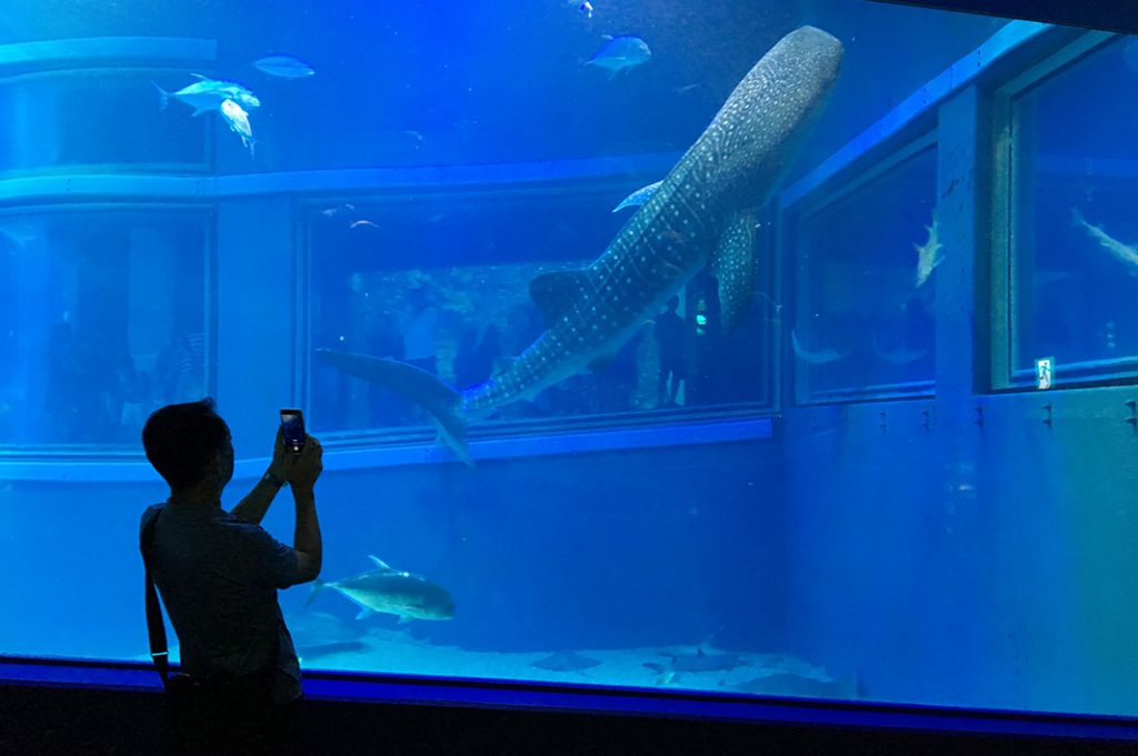 Things to do in Osaka: Osaka Aquarium Kaiyukan. Great Osaka indoor activity.