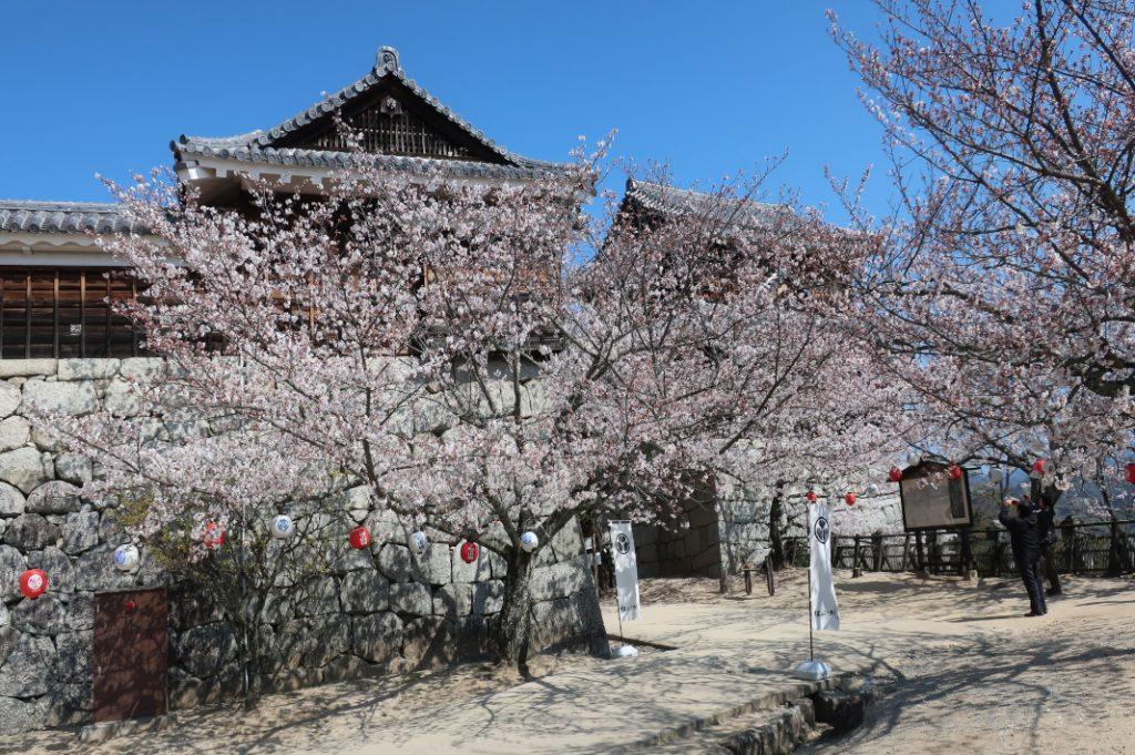 The front of Matsuyama Castle during the cherry blossom season in Shikoku. Shimanami Kaido.