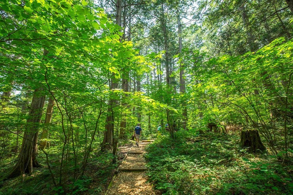 Akasawa Natural Recreational Forest day trips