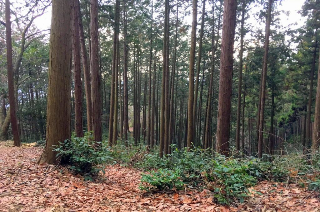 Mt. Takasashi is heavily forested