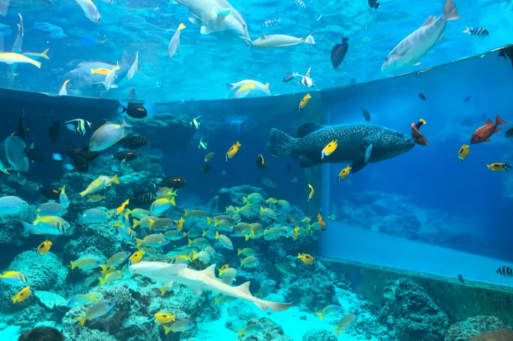 A number of colorful sea creatures are on display at the Okinawa Churaumi Aquarium.