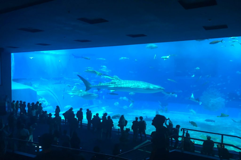 The largest water-tank at the aquarium is home to hundreds of Okinawa's underwater denizens.