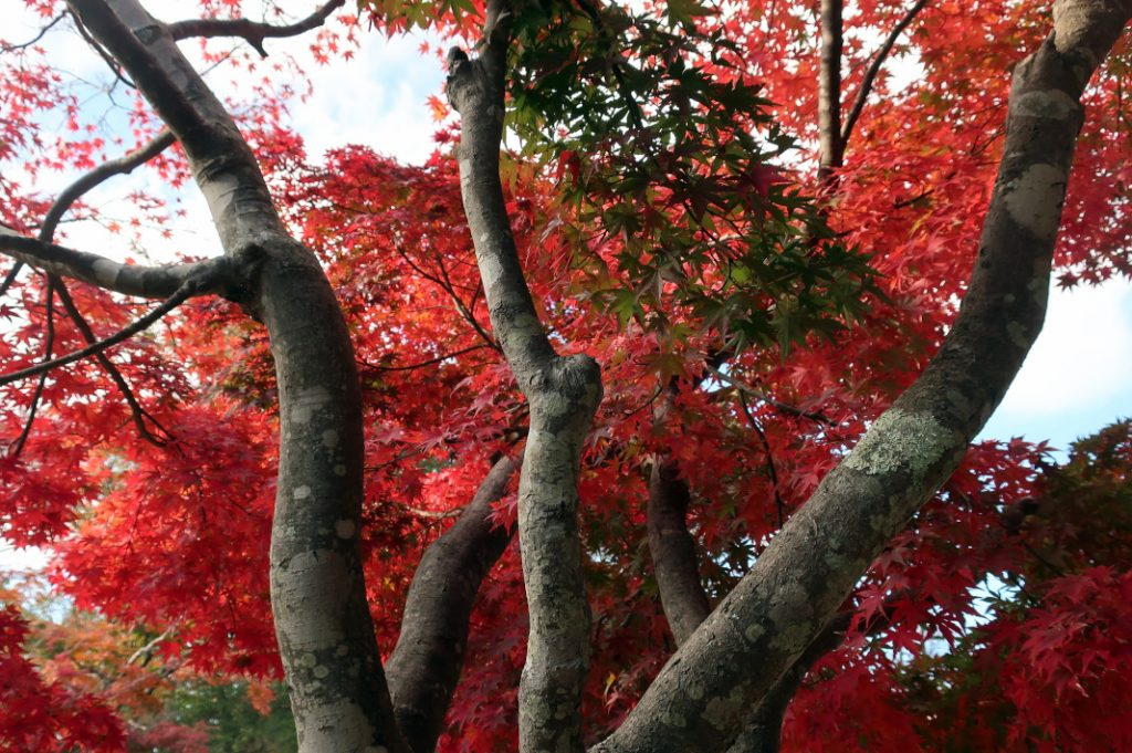 Many also visit Mount Takao for its autumn foliage