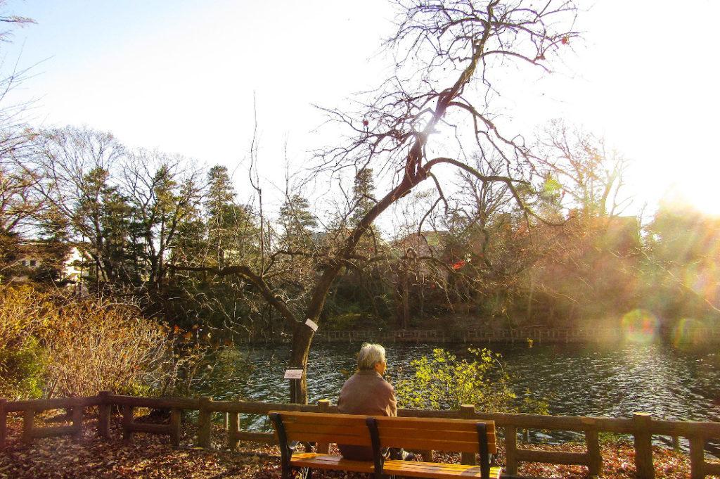 Kichijoji Tour: Inokashira Park is the perfect place to relax on your Kichijoji tour.
