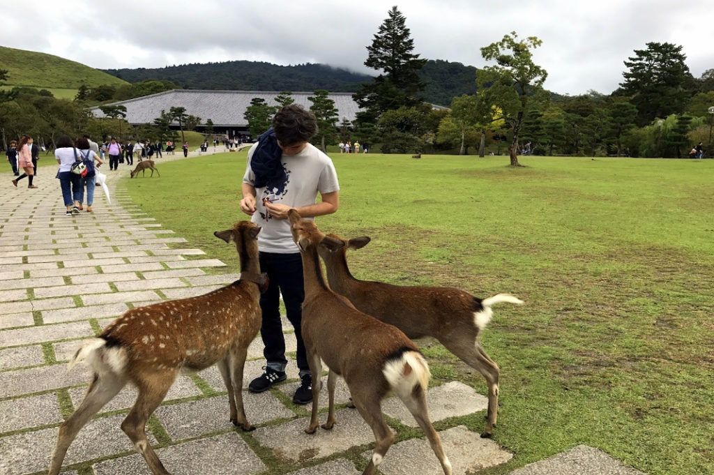 But mostly, the bowing deer love Nara Park.