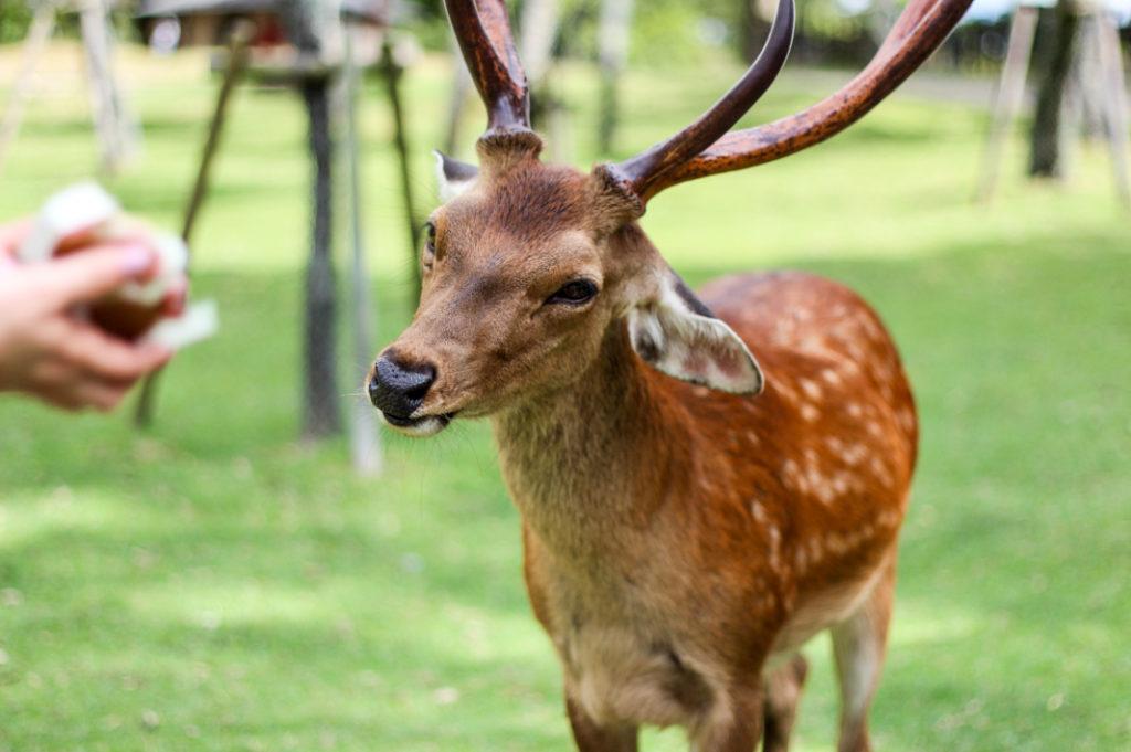 An especially photogenic deer.