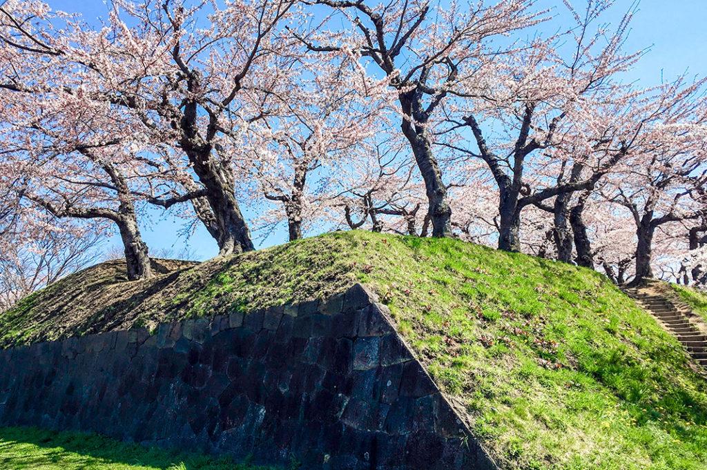 Goryokaku is certainly one of Hokkaido's top cherry blossom viewing spots