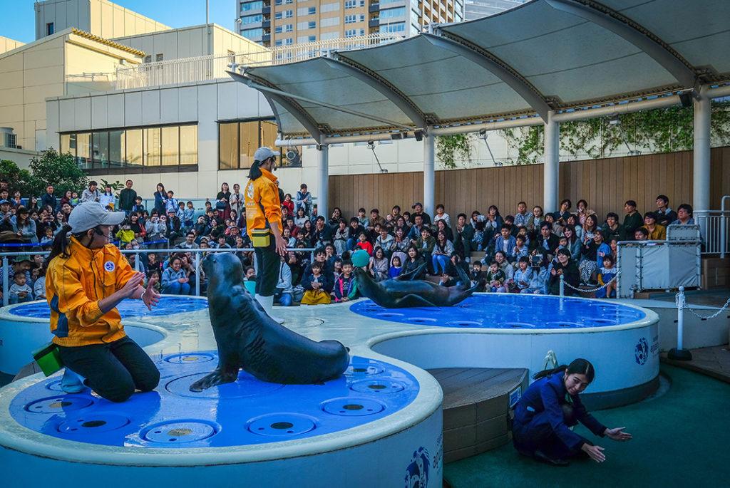 The Sunshine City Aquarium in Ikebukuro