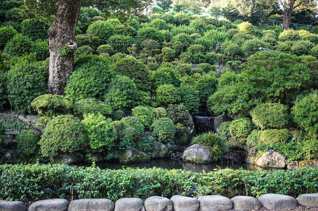 Azaleas at Nezu Shrine, Tokyo