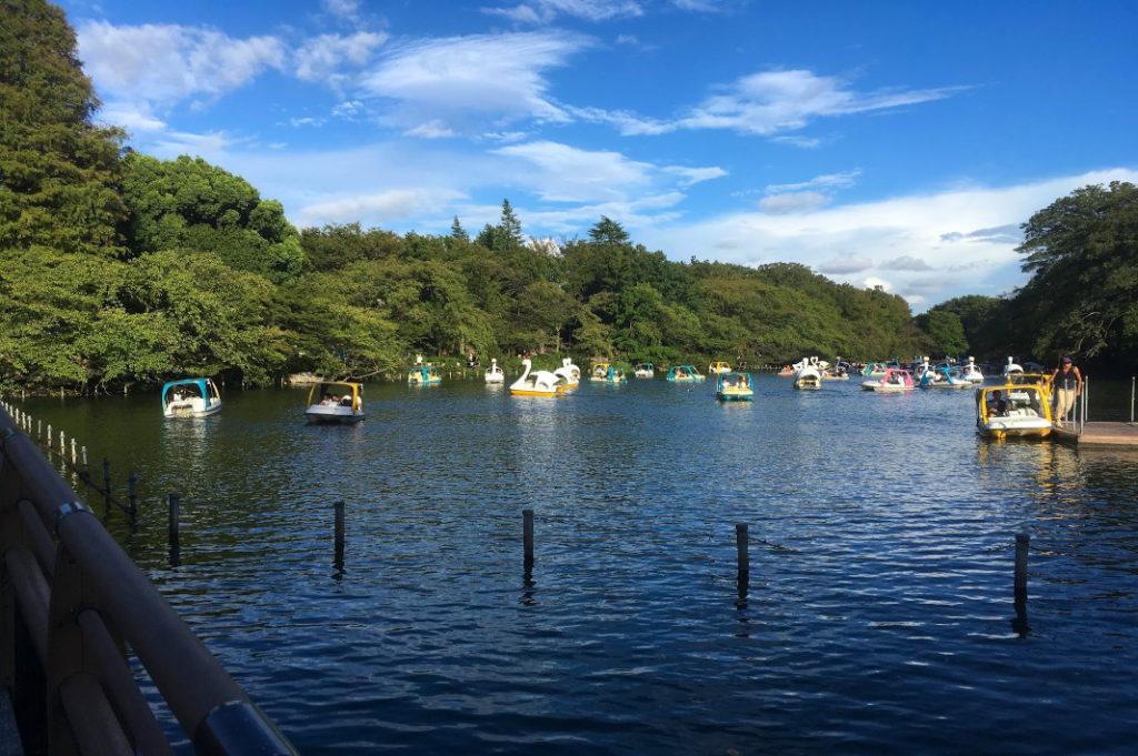 Your river walk along the Kanda River ends in Inokashira Park.