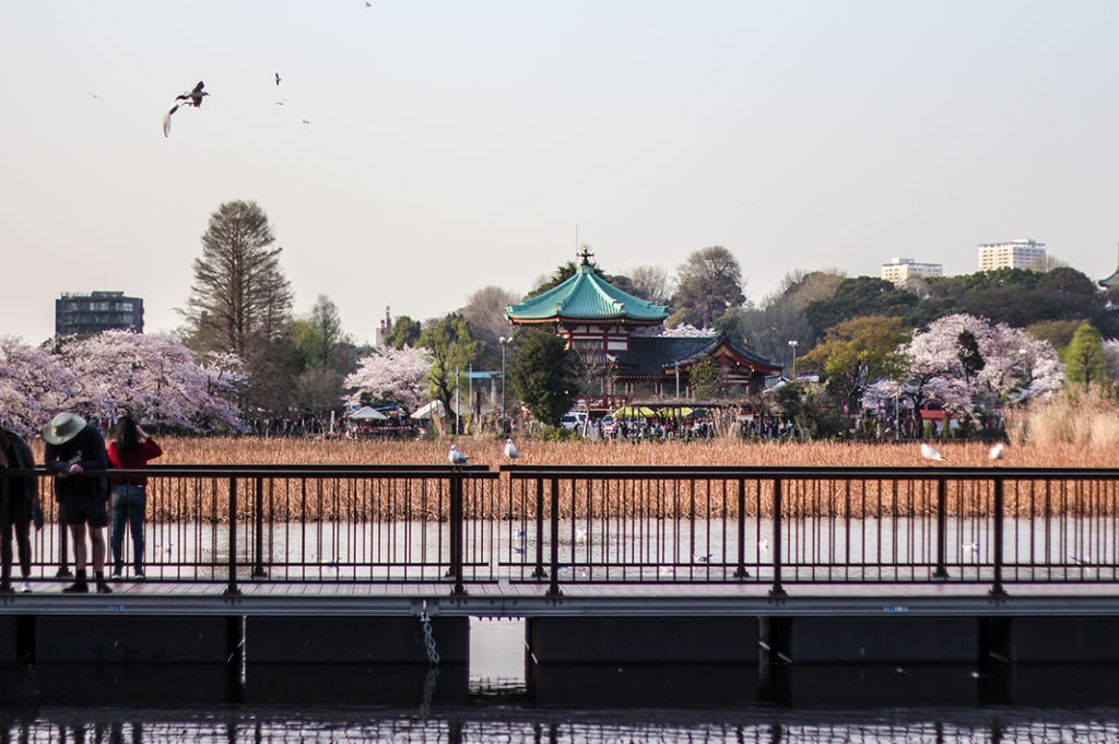 Ueno Park is one of the best places to see cherry blossoms in Tokyo.