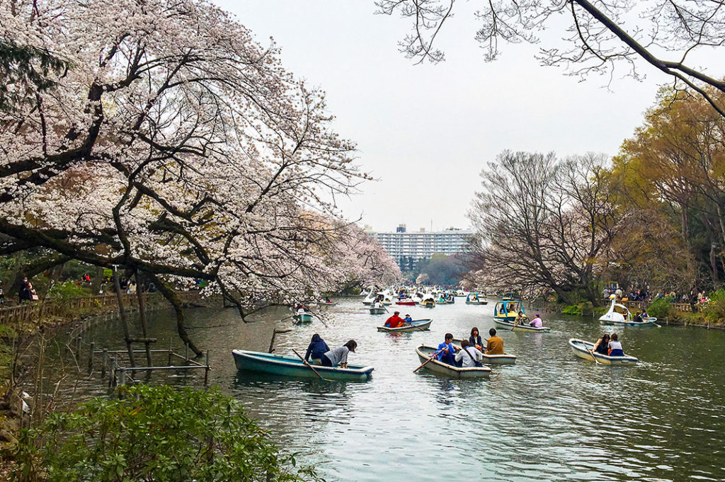 Inokashira Park in Tokyo is the perfect place for hanami!