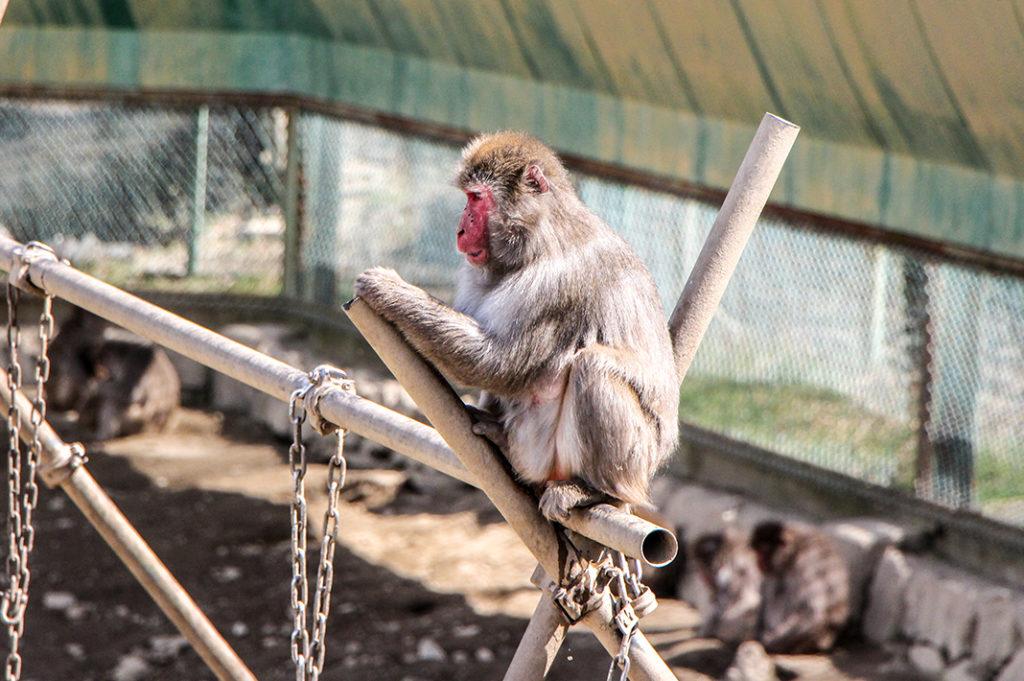 Hodosan Zoo
