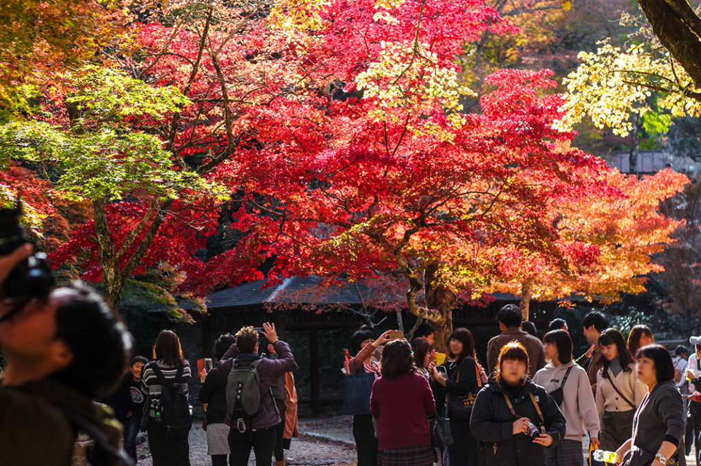 Momijidani park on Miyajima is one of the best spots to see Autumn colours in Japan