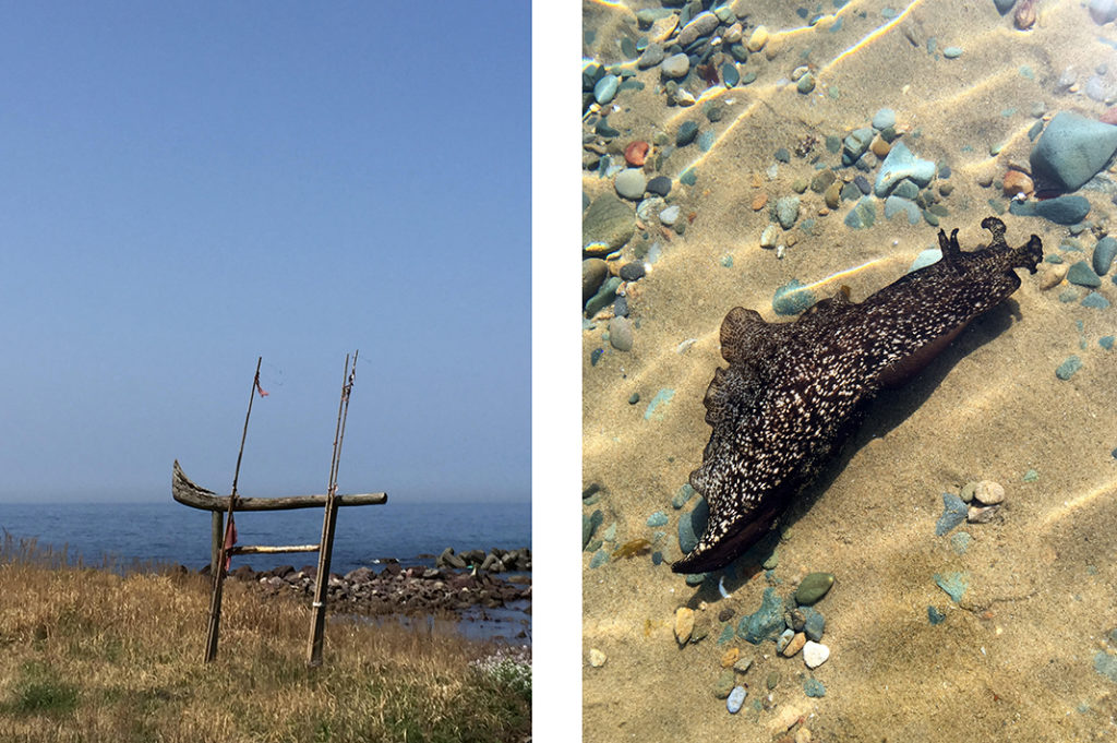 A traditional 'fisherman's Torii' (left) and a huge, unfazed sea-slug (right) in the crystalline waters of Kayo Beach.