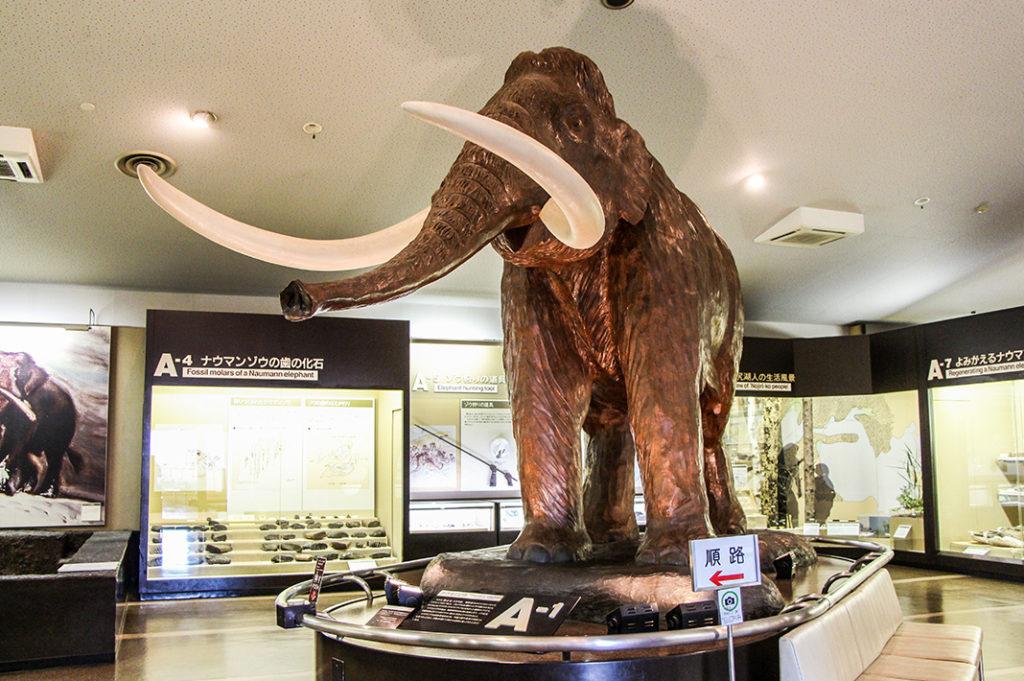 The display at Nojiriko Naumann Elephant Museum