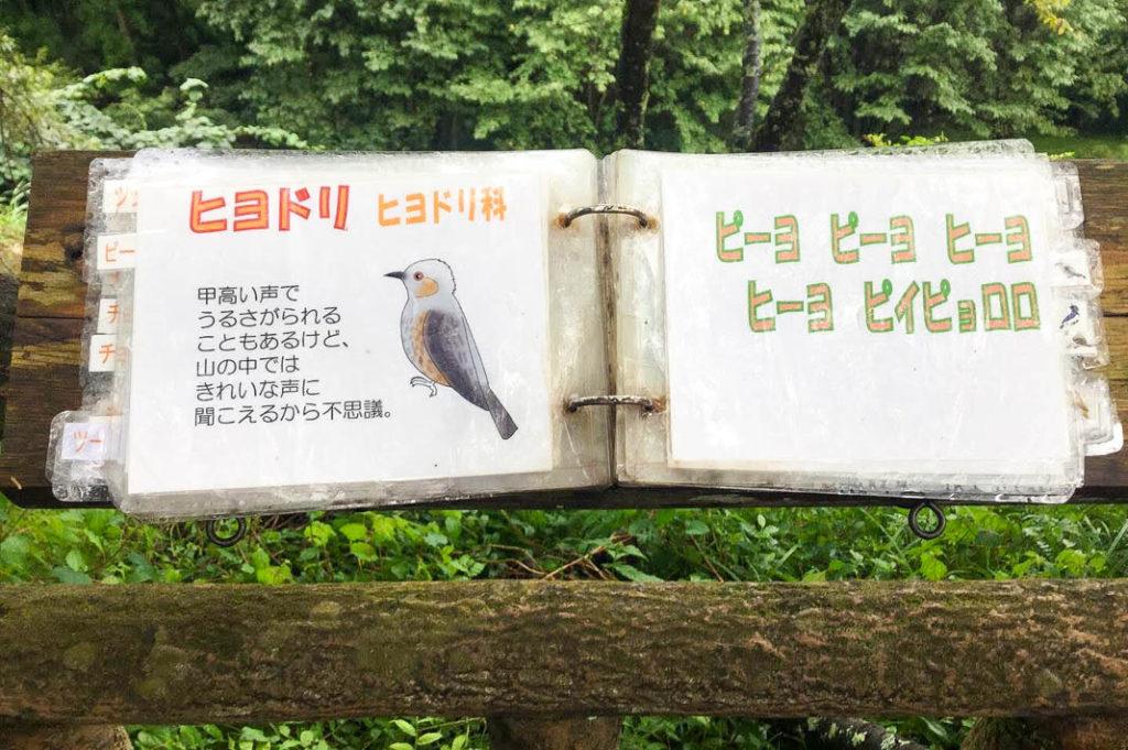 Laminated signs detailing bird calls on Mt. Mitake.