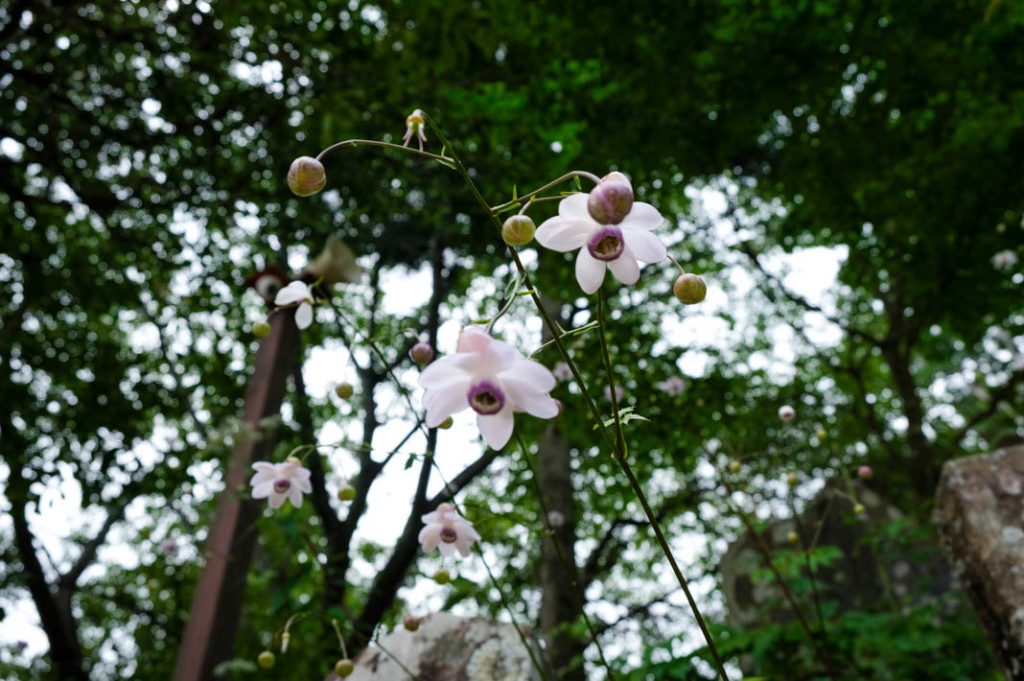 Photograph beautiful mountain flora on this day trip from Tokyo.