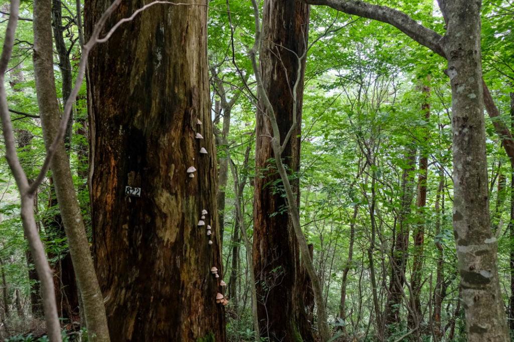 The Shin-en-no-Mori trail on Mt. Mitake.