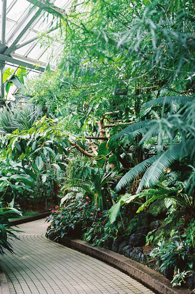 The Kyoto Botanical Gardens